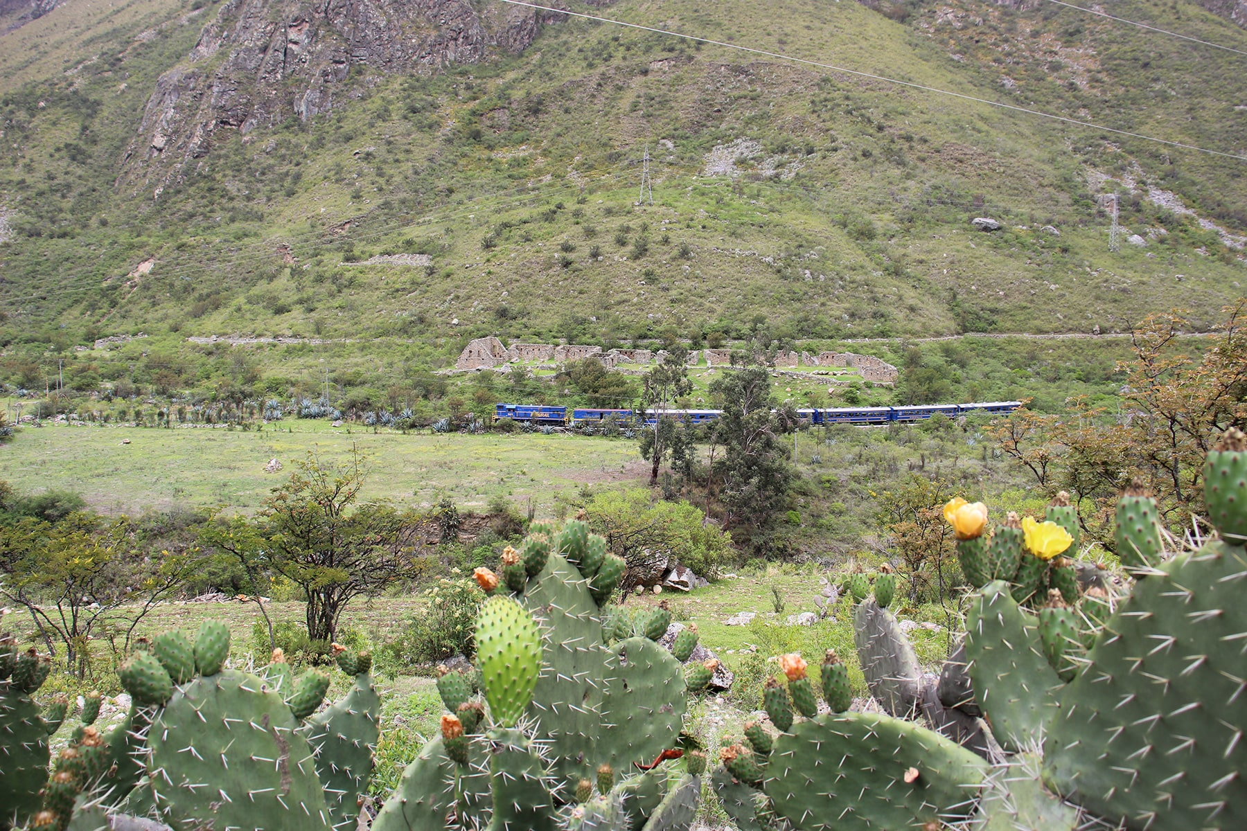 Train in the middle of the landscape with cactuses