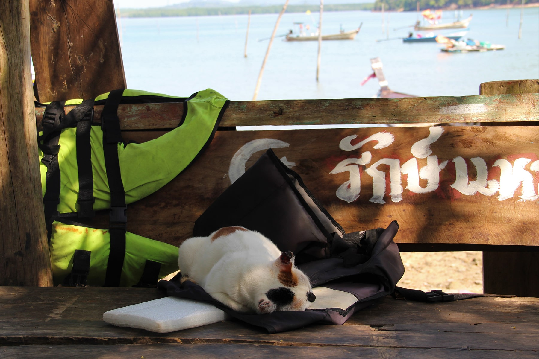 Cat sleeping on lifejackets in Koh Yao Yai