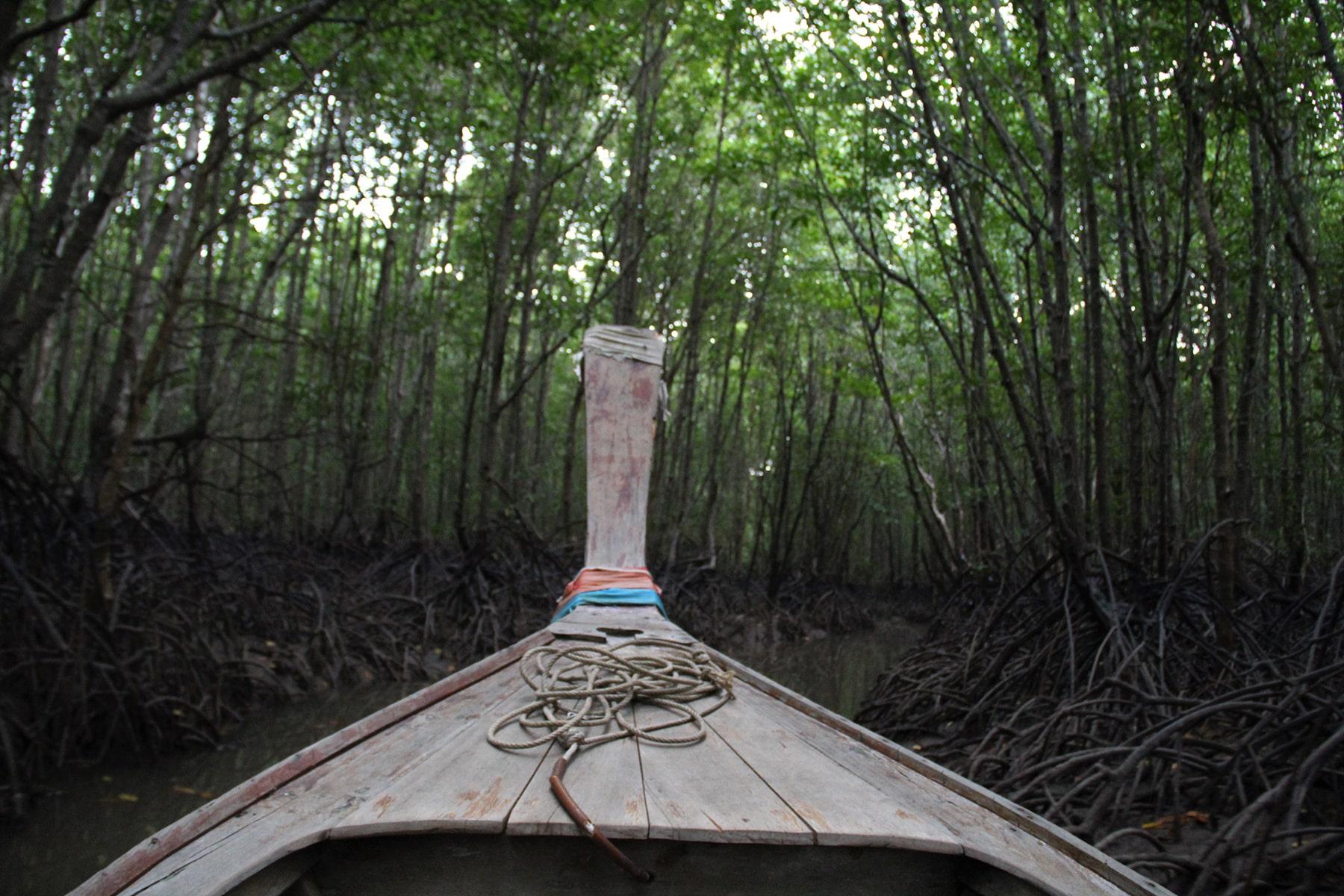 Tour de bateau dans la mangrove de Krabi