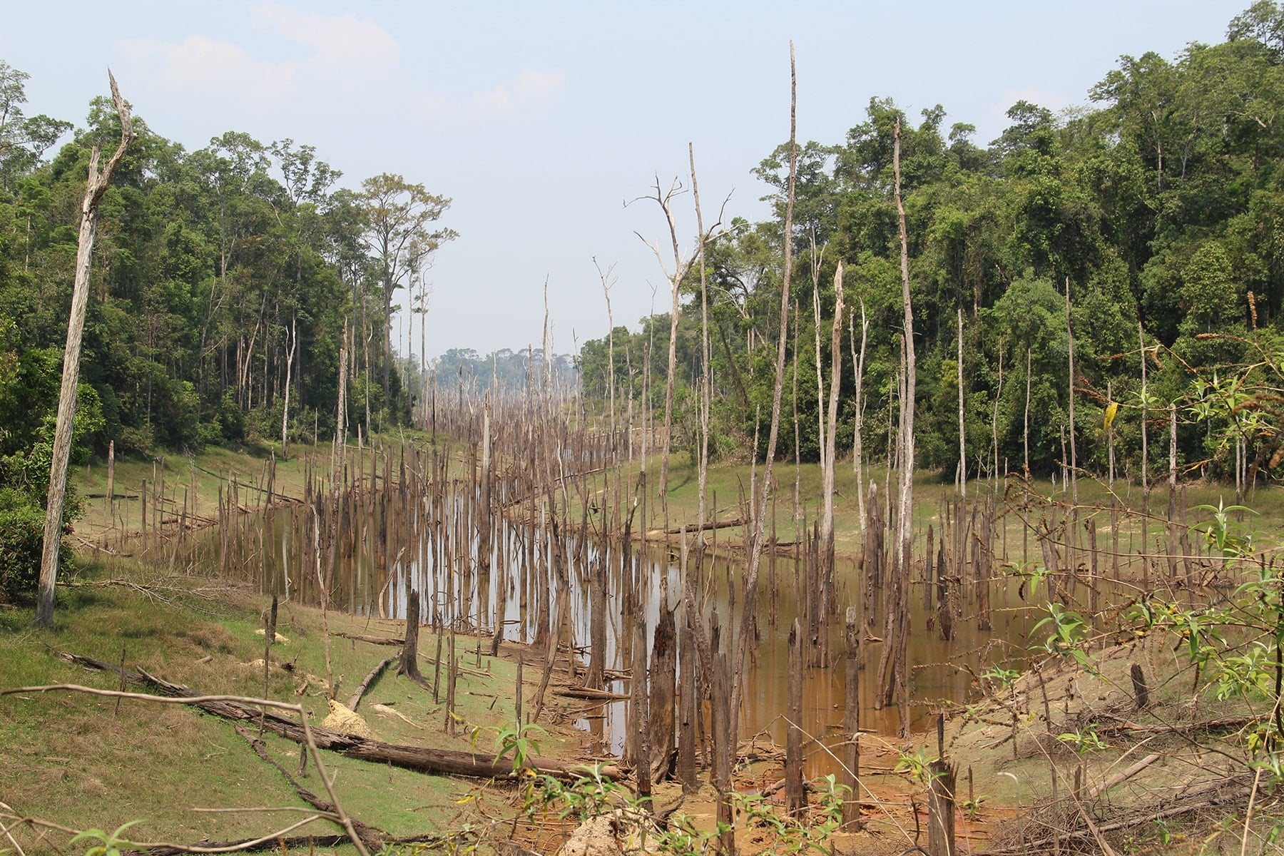 Dead trees on a river bed near Thalang, Thakek loop, Laos