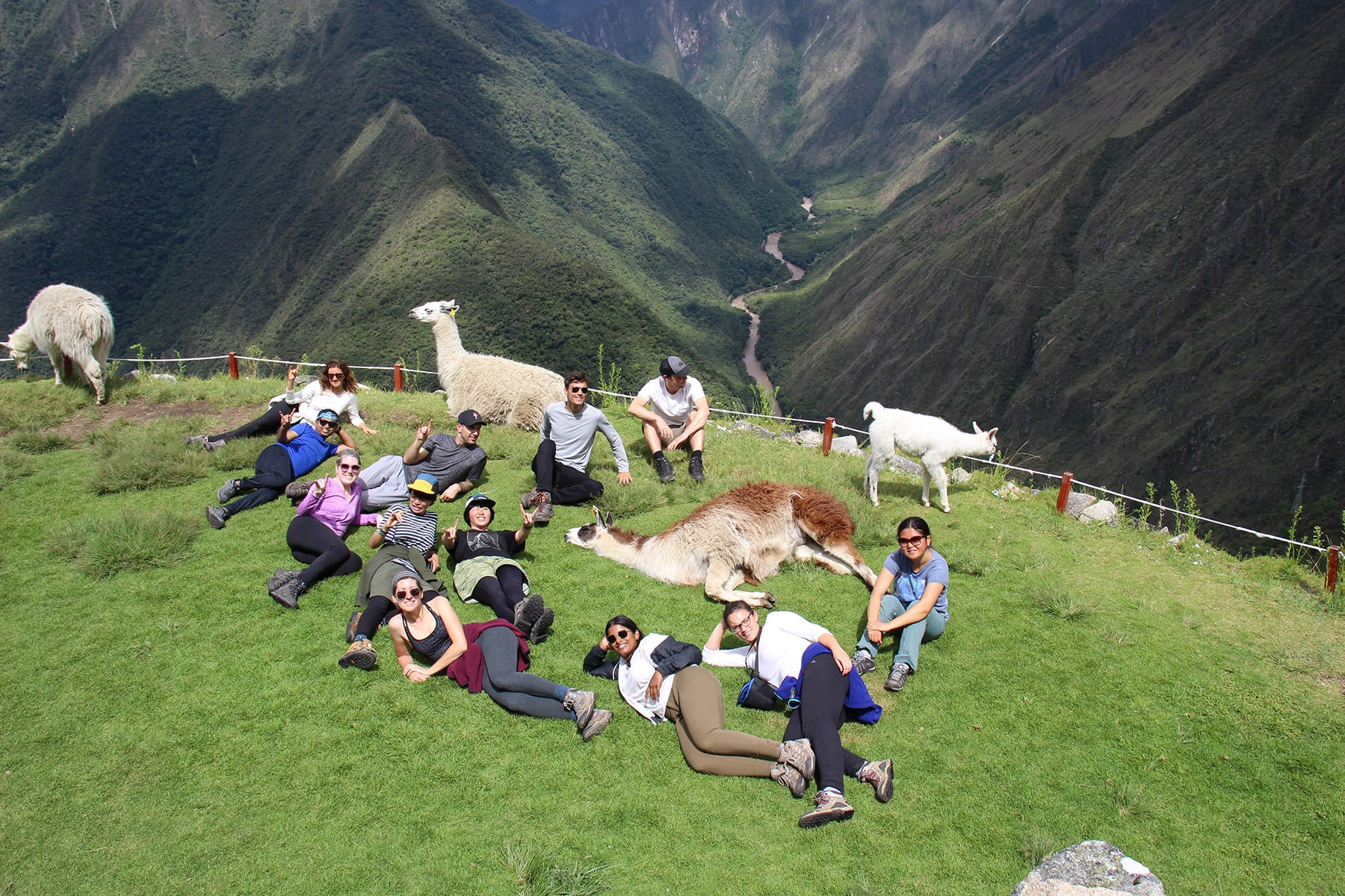 Group lying with llamas, inca trail