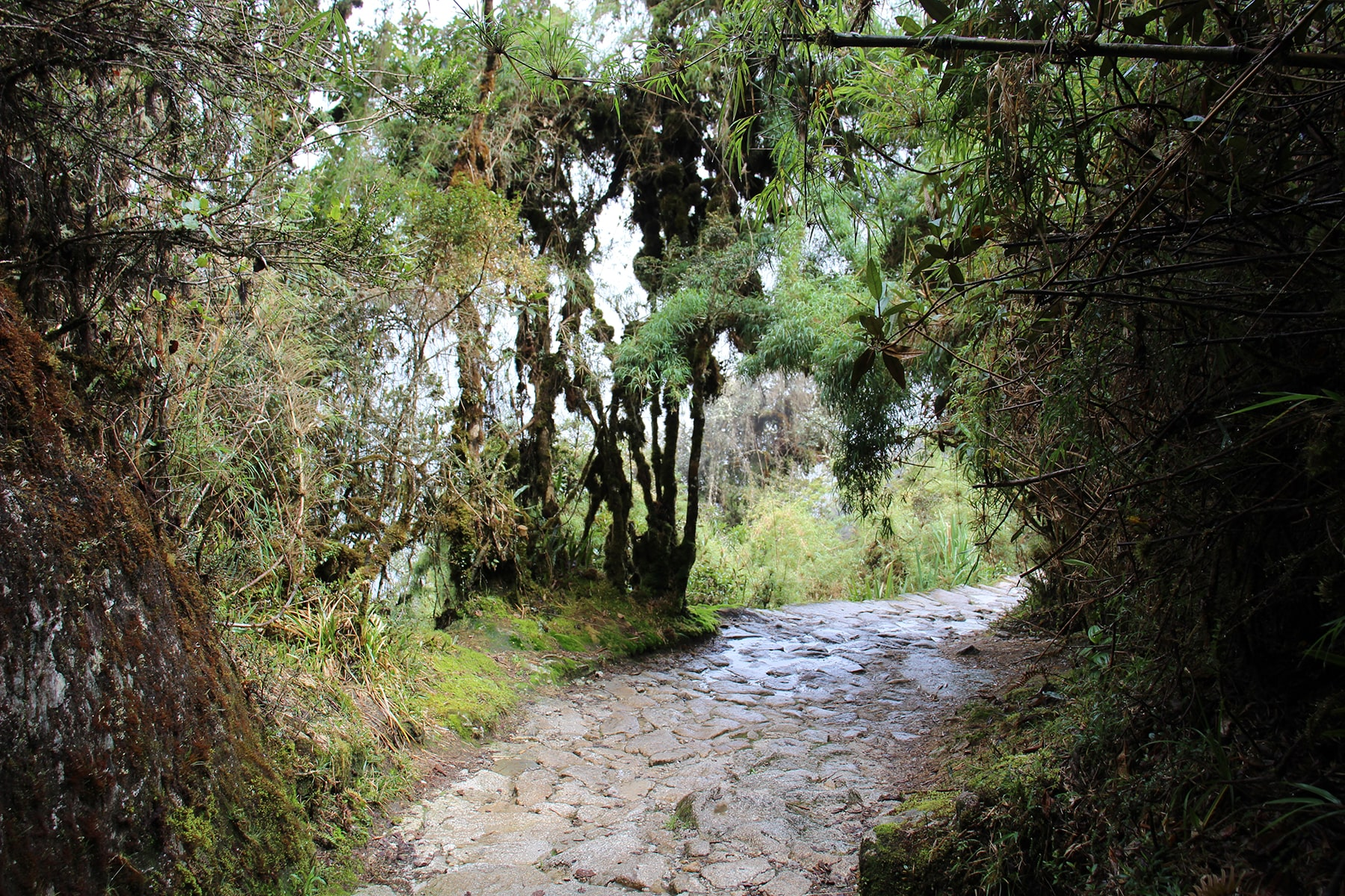 The path on the jungle on inca trail