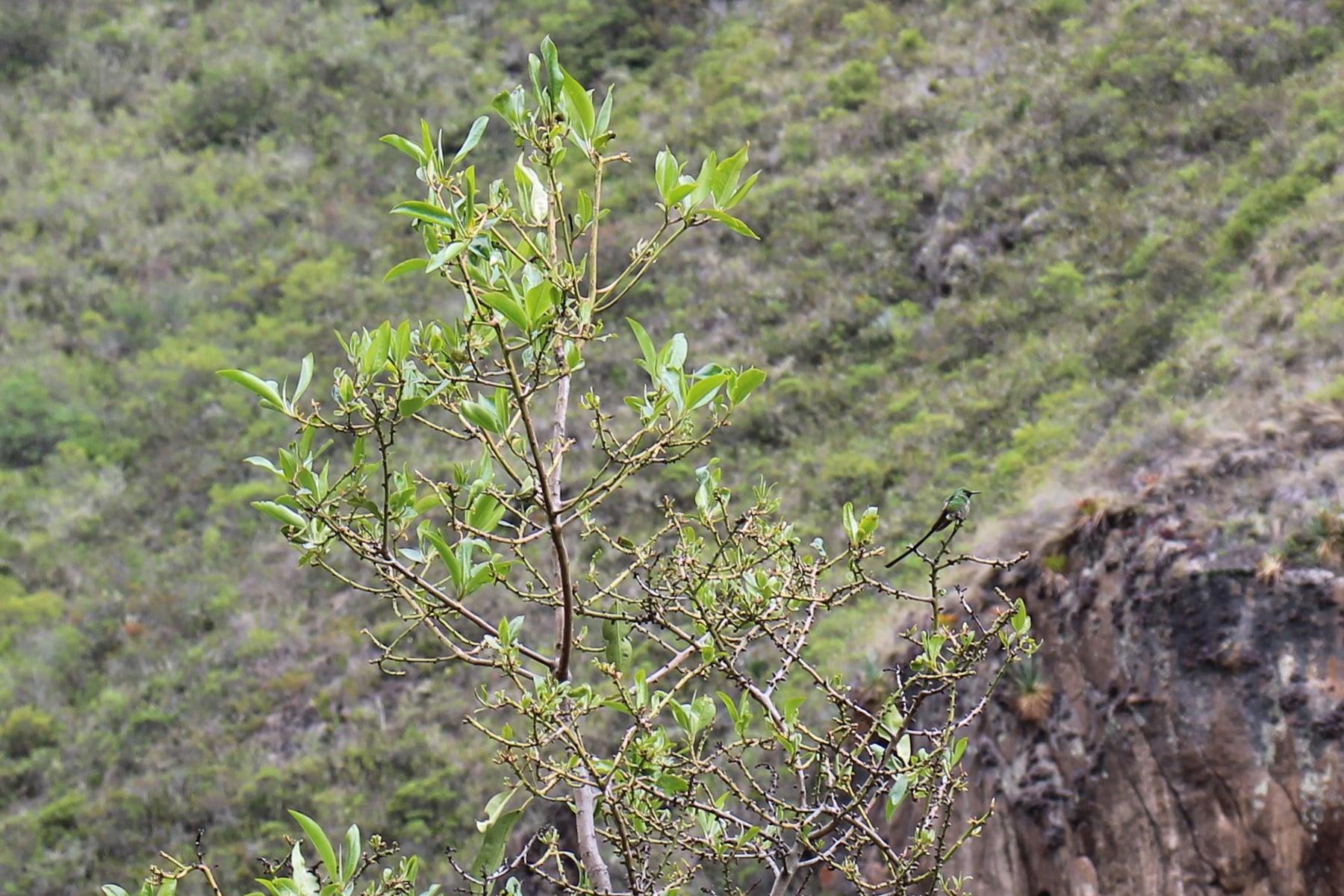 Un colibrì sulla destra, inca trail