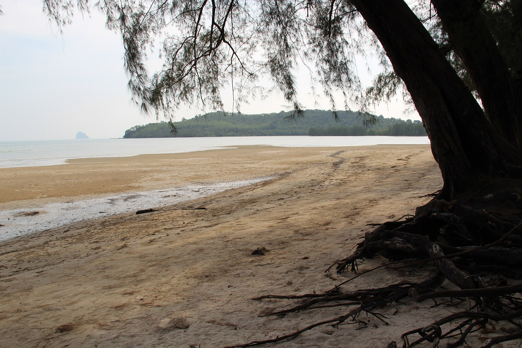 Tree on Khlong Son Beach in Koh Yao Yai